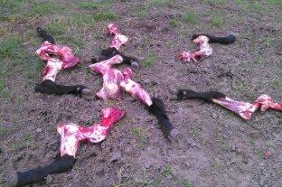 Ni el INTA se salva: delincuentes carnearon terneras en la guachera de la EEA Rafaela