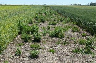 Herbicidas en el suelo y residualidad