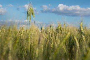 Subas para la soja, el maíz y el trigo en Rosario