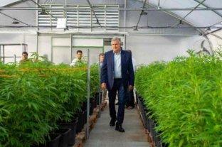 Comienza a funcionar el primer laboratorio de cannabis medicinal del país