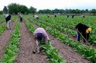 Corrientes: Nación envió $ 240 millones para asistir a pequeños productores tabacaleros