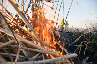 """Ley de Manejo del Fuego: """"pone en riesgo a la producción agropecuaria en todo el territorio nacional"""""""
