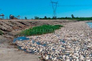 Una imagen que duele: cientos de peces muertos en aguas del Río Salado -
