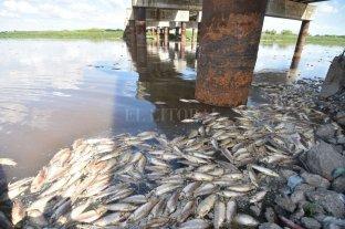 Mortandad de peces en el Río Salado: la explicación de los expertos