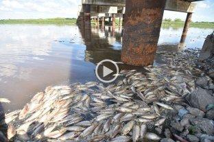 Mortandad de peces en el Río Salado: la explicación de los expertos -