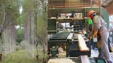 Entidades empresarias conformaron el Consejo Foresto Industrial Argentino