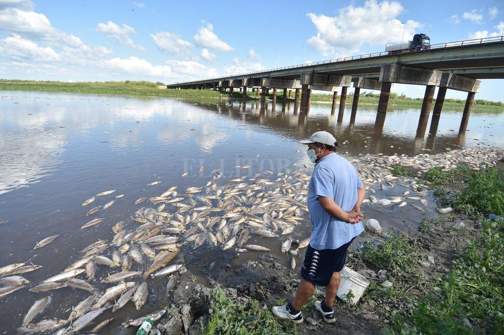 """Mortandad de peces: """"La principal hipótesis es la falta de oxígeno"""" - La imagen impacta y genera tristeza. La mortandad de peces en el río Salado, una más de las consecuencias que apareja la bajante histórica. -"""