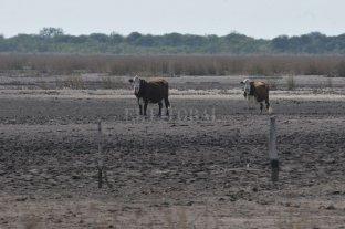 Sequía, heladas, incendios: el podio de daños para el campo en 2020