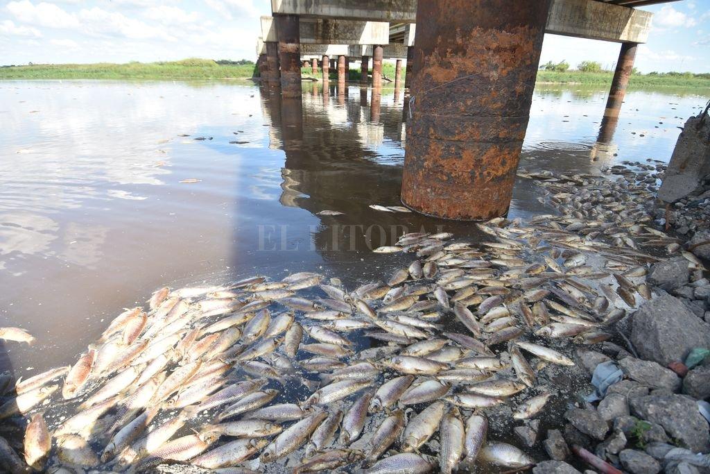 No bañarse en el río y no consumir pescados de la zona, las recomendaciones del gobierno de Santo Tomé. Crédito: Manuel Fabatia