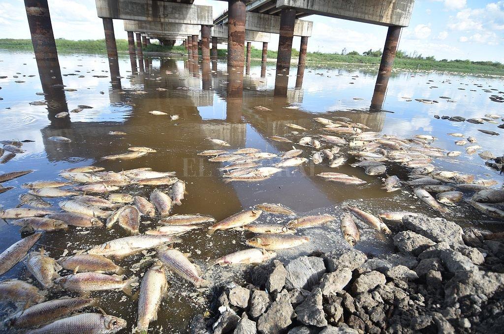 Las muestras analizadas por el Inali se tomaron debajo del puente de la Ruta 70; y aguas arriba y abajo del Puente Carretero. Crédito: Manuel Fabatia