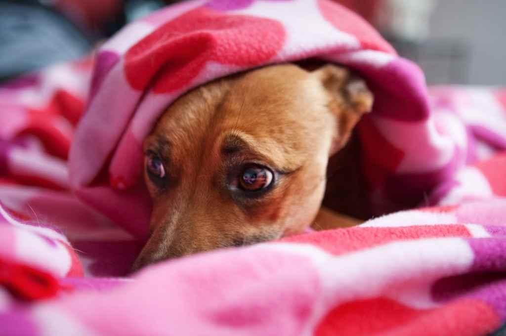 Una de las recomendaciones que destacó la veterinaria Soledad Masjoan es dejar a las mascotas en un lugar cerrado y seguro,