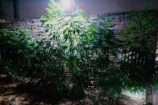 Buscaban armas y hallaron marihuana