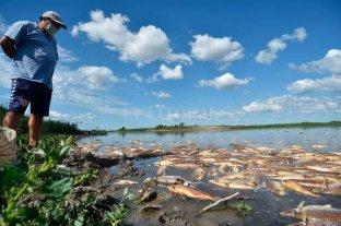 La mortandad de peces: otra consecuencia del bajo caudal