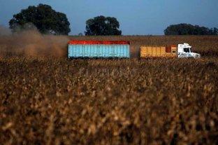"""Si no se puede exportar, el maíz tendría que pagarse sin retenciones a """"precio lleno"""""""