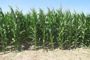 Crece la tensión del gobierno con el campo por el cierre de las exportaciones de maíz