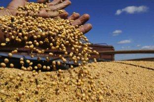 Retrocedieron la soja y el maíz disponible en Rosario