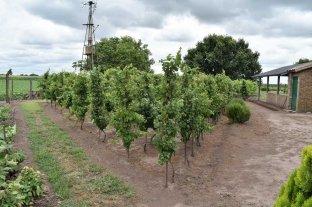 No todo es soja: un pueblo santafesino cosecha y envasa su propio vino