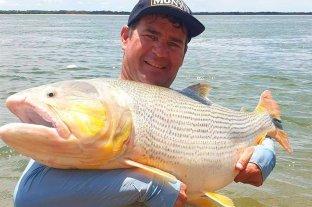 """Pescaron un dorado """"gigante"""" en el Río Paraná: pesaba unos 30 kilos"""