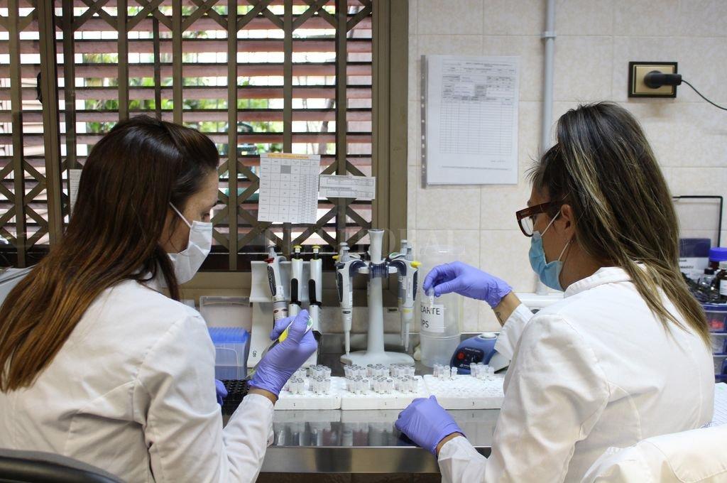Las especialistas en Biotecnología del laboratorio entrerriano en pleno análisis para determinar si los pacientes tratados con suero de equino generaron inmunogenicidad. Crédito: Tomás Rico