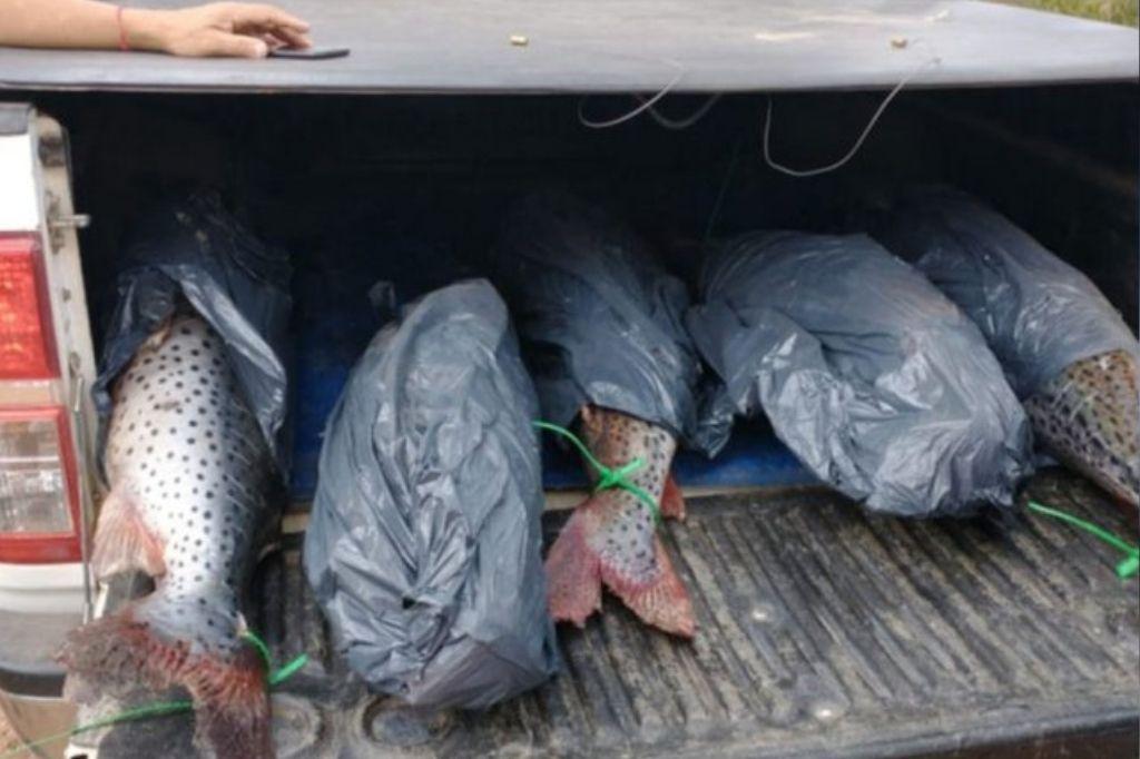 Los pescados fueron hallados en la caja de la camioneta Crédito: Gentileza