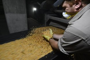 Los granos cerraron al alza en Rosario