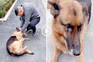 Es viral: una perrita lloró de felicidad cuando se reencontró con su ex entrenador policial