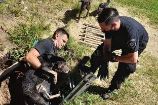 Bomberos rescataron a un perro que cayó en un pozo ciego