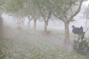 Mendoza: fuerte temporal generó importantes pérdidas en los cultivos
