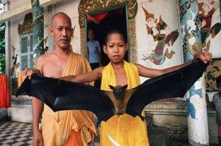 Virus Nipah: la enfermedad que preocupa a Asia por temor a otra pandemia