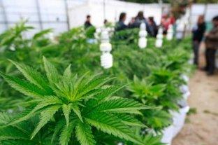 """Descubren un enorme """"indoor"""" de cultivo de marihuana en Rosario y secuestran 300 plantas"""