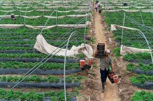Advierten por falta de mano de obra para las cosechas