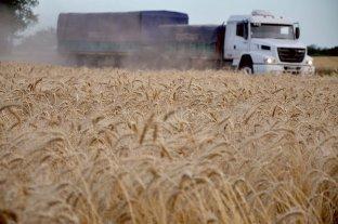 Trigo: hay más de 10 millones de toneladas para pasar el año