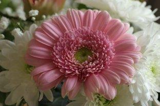 Las doce mejores flores para regalar, según cada mes