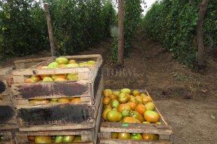 El Consejo Agroindustrial Argentino valoró la baja en los derechos de exportación