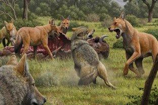 Los lobos gigantes existieron, pero no se parecían a los de Game of Thrones