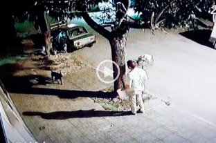 Polémico: un vecino disparó al piso ante el ataque de un pitbull -  -