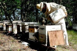 Asistencia a los apicultores