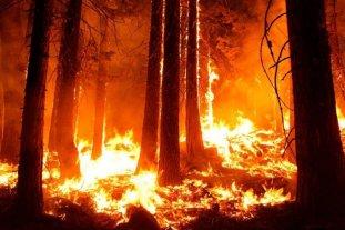 Río Negro, Buenos Aires y Santa Cruz reportan incendios forestales activos