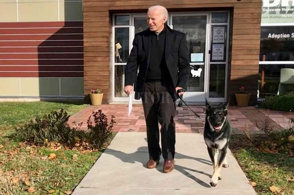 Major, el perro que vivirá en la Casa Blanca. Crédito: Gentileza