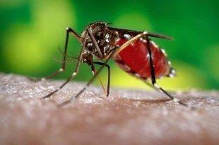 Dengue: descacharrado y prevención en 7 mil domicilios de la ciudad