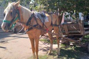 Rescataron un caballo en mal estado
