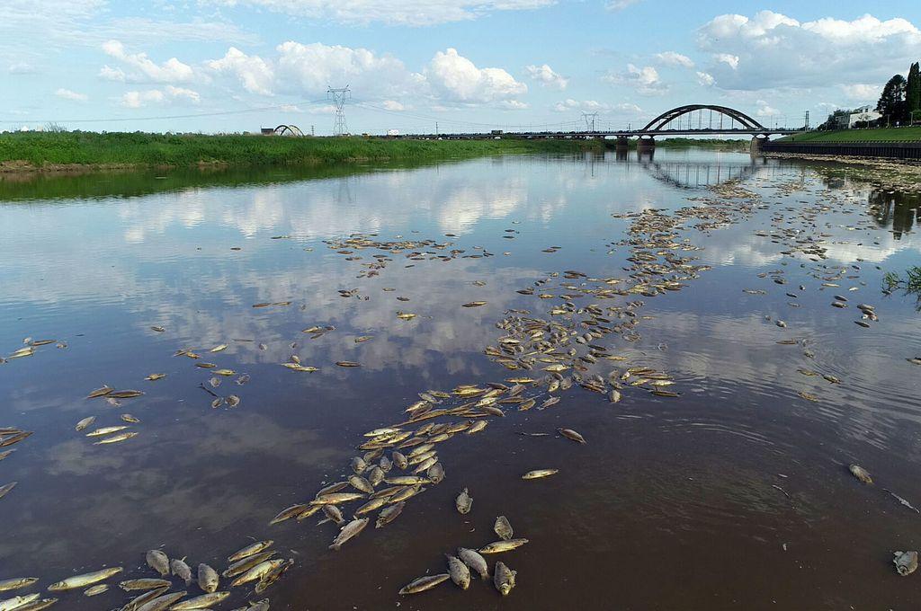 Mortandad de peces: el gobierno ratificó que la causa fue la ausencia de oxígeno -  -