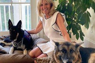 Perros presidenciales: Champ y Major ya se mudaron a la Casa Blanca