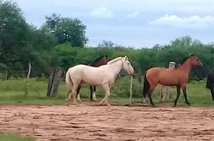 """Un caballo """"desbocado"""" trajo problemas en la Ruta Provincial 1"""