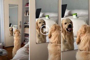 Un perro que se odia cuando se mira al espejo se hizo viral