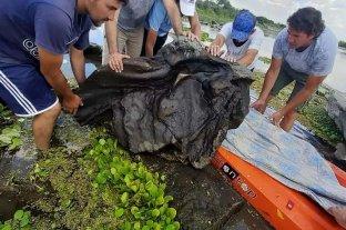 Vecinos hallaron restos de un gliptodonte en Santiago del Estero