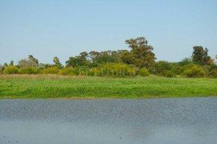 """Hynes: """"Es urgente reglamentar la ley de humedales en Santa Fe"""""""