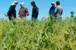 Día mundial de las legumbres: el potencial sigue ahí