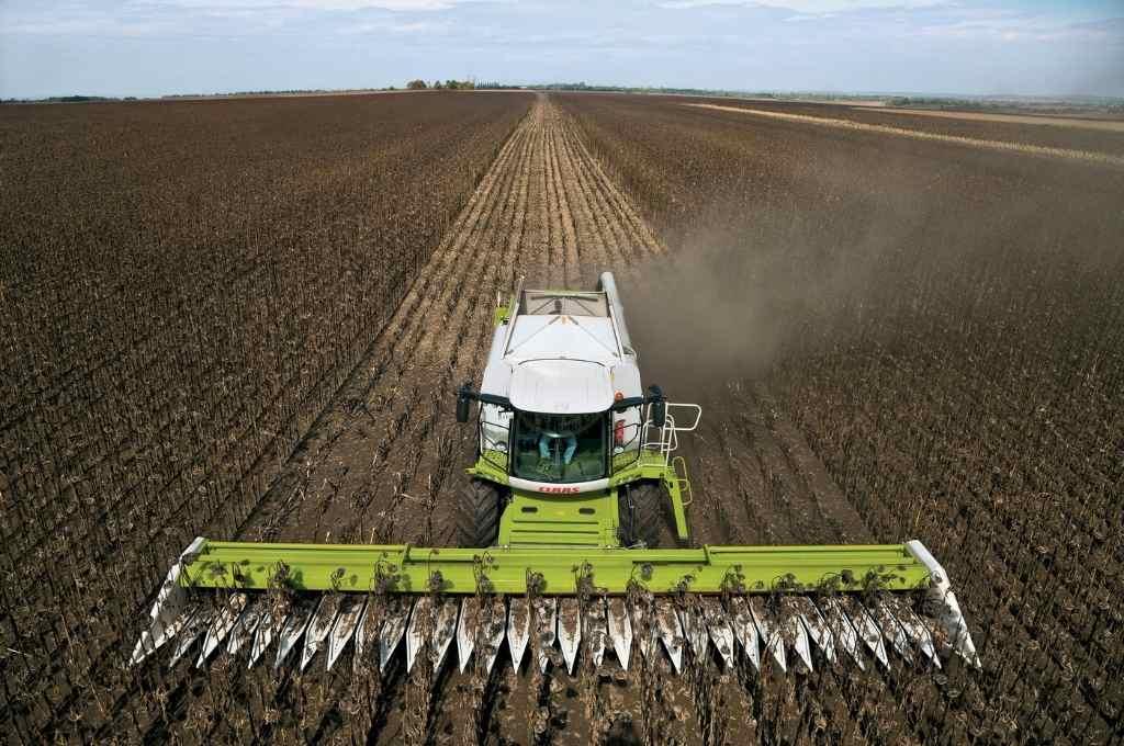 Los que no tuvieron humedad en el suelo, pudieron entrar a cosechar. Pero son apenas 13,7% del área sembrada.    Crédito: Archivo El Litoral