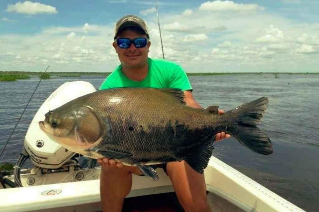 Tambaqui. La aparición de una especie exótica durante una pesca en el Paraná, días atrás, puso en alerta a los especialistas.    Crédito: Archivo